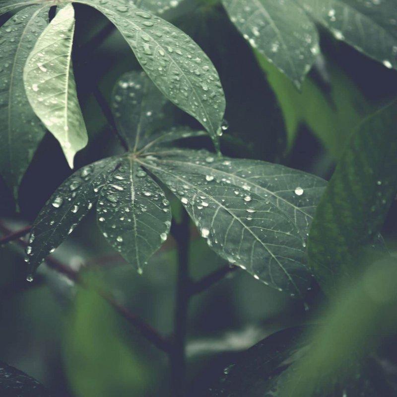 Beetbewässerung_grünwasser