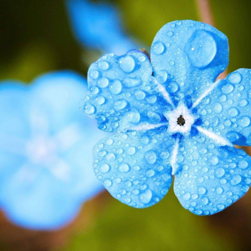 Beetbewässerung_blumeblau