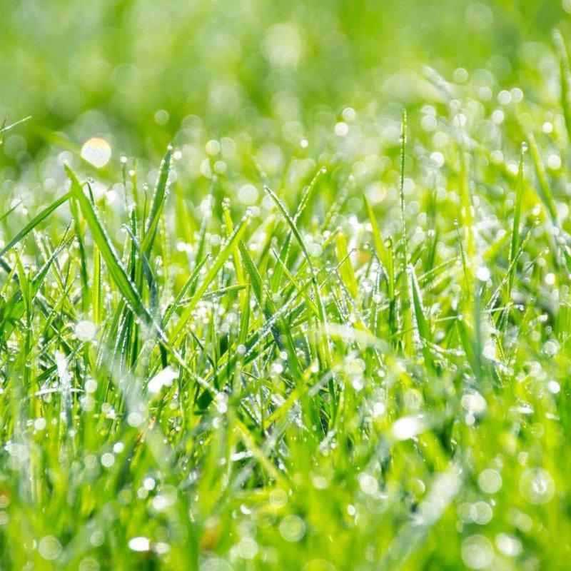 Rasenbewässerung_bewaesserterrasen
